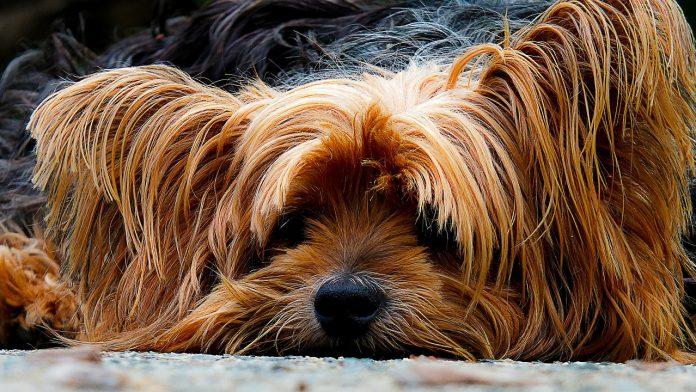hund-i-huset